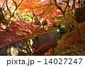 京都 東福寺の紅葉 14027247