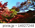 京都 東福寺の紅葉 14027248