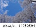 八ヶ岳の樹氷 14030594