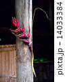 飾り あばら屋 ハットの写真 14033384