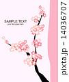 桜 14036707