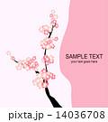 桜 14036708