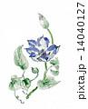 手描きイラスト 花 テッセンのイラスト 14040127