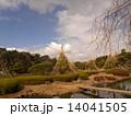 雪吊り 千葉公園 綿打池の写真 14041505