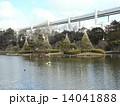 雪吊り 千葉公園 綿打池の写真 14041888