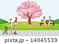 桜の木 春の公園 くつろぐ人々 14045539