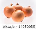 玉葱 たまねぎ タマネギの写真 14050035