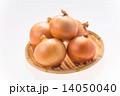 玉葱 たまねぎ タマネギの写真 14050040