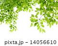 新緑 14056610