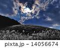 ススキ高原の奇跡 14056674