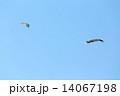 端午の節供 こどもの日 鯉のぼりの写真 14067198
