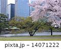 浜離宮 桜 満開の写真 14071222
