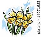 ラッパスイセン 水彩 花のイラスト 14071682