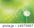 Dandelion たんぽぽ タンポポのイラスト 14073667