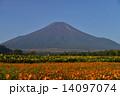 花の都公園 ひまわり 花畑の写真 14097074