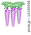 藤の花 花房 花のイラスト 14100506