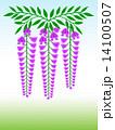 藤の花 花房 花のイラスト 14100507