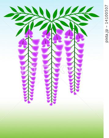 藤の花 14100507