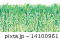 さとうきび畑 14100961