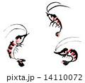 桜えび 14110072