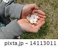 手のひら桜 14113011