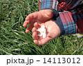 手のひら桜2 14113012