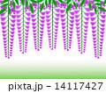 藤の花 花房 花のイラスト 14117427