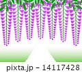 藤の花 花 藤のイラスト 14117428