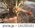 斧 古びた 薪の写真 14130101