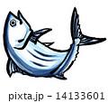 鰹 14133601
