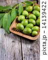 クルミ グリーン 緑の写真 14139422