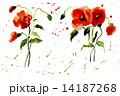 花 水彩画 赤のイラスト 14187268