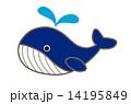 クジラ 14195849