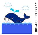 クジラ 14195850