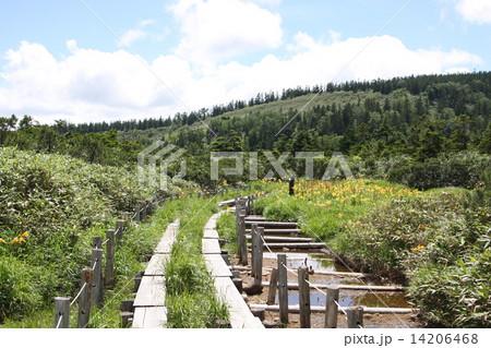 八幡平、黒谷地湿原2 14206468