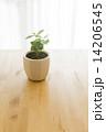 観葉植物 14206545