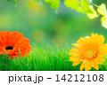 Spring frame 14212108
