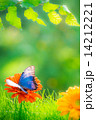Spring background 14212221