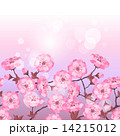 Spring sakura flowers seamless pattern horizontal border 14215012