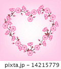 Spring sakura flowers Valentines day background 14215779