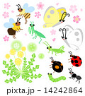 春の花 昆虫 14242864