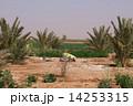 礼拝 祈り イスラム教の写真 14253315