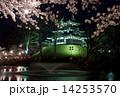 桜 サクラ 高田の写真 14253570