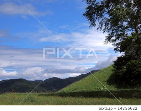 夏の里山 14256622