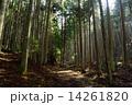 木 道 森林の写真 14261820