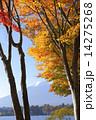 河口湖 紅葉 山の写真 14275268