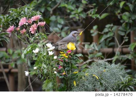 花を食べる鳥 14278470