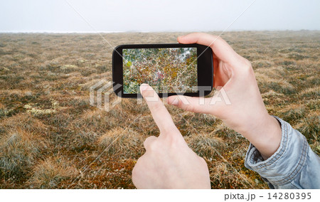 tourist taking photo of plant in Arctic tundraの写真素材 [14280395] - PIXTA
