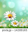Daisies With Ladybug 14289165