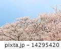 満開の桜と青空 14295420
